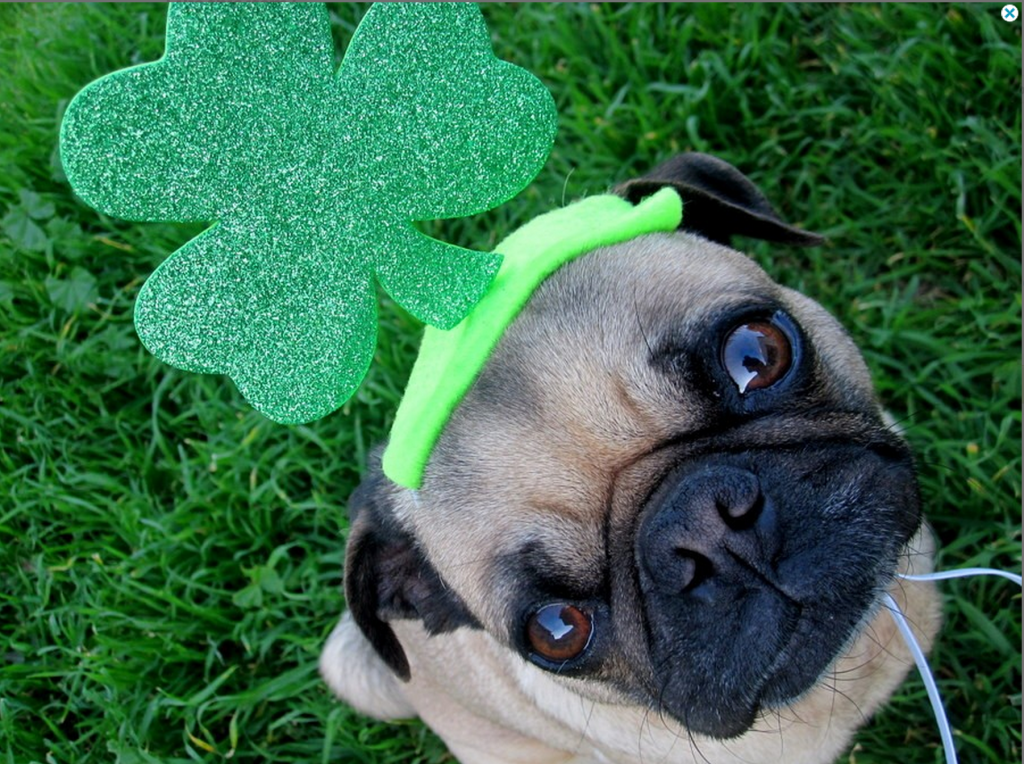 Have a Happy & Safe St. Patrick's Day!