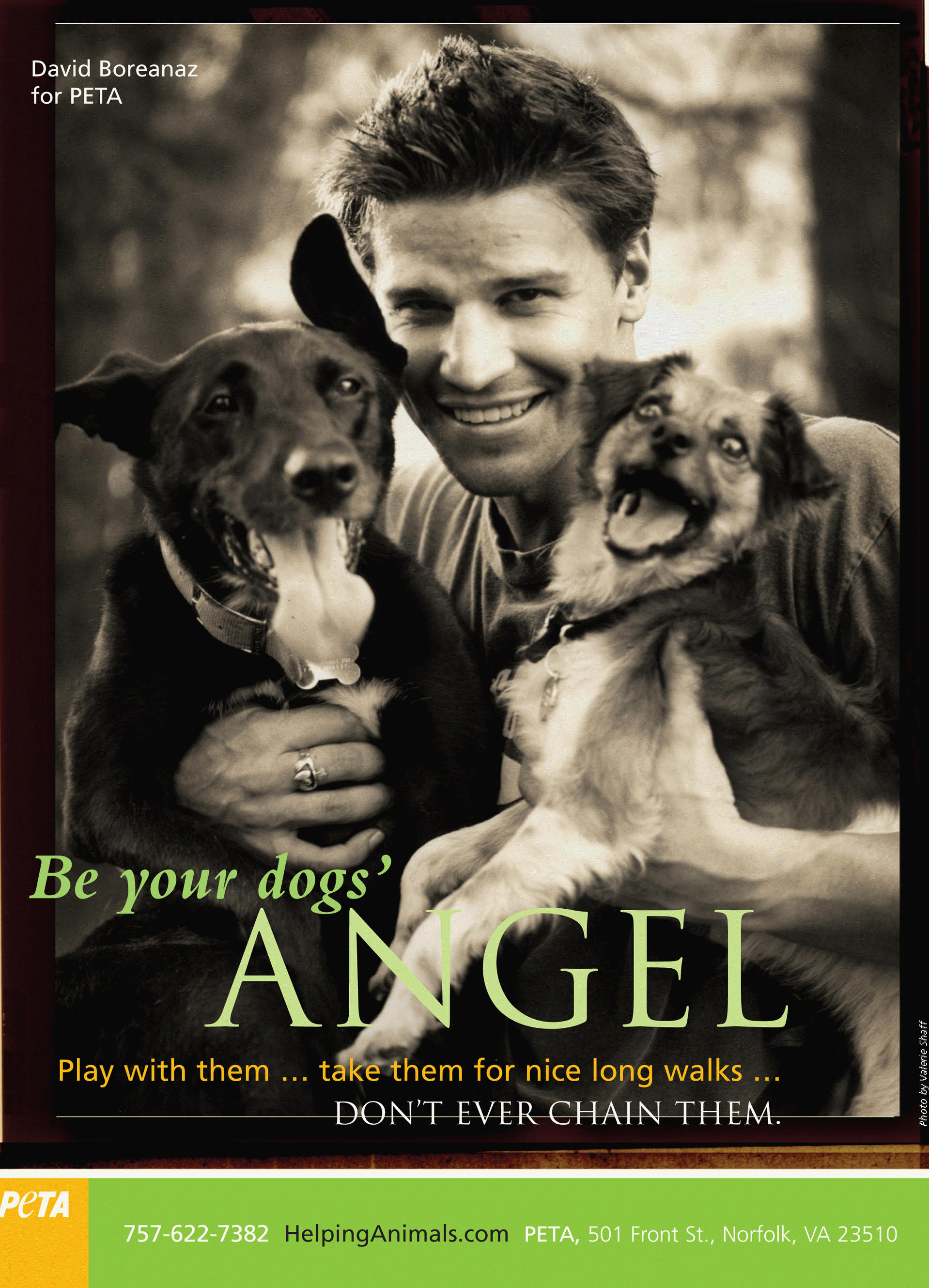 David Boreanaz for PETA